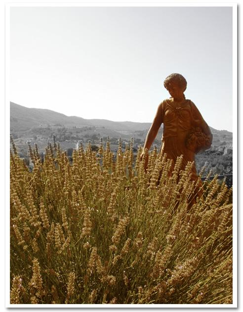 """Toscana Colección """"LUZ"""""""